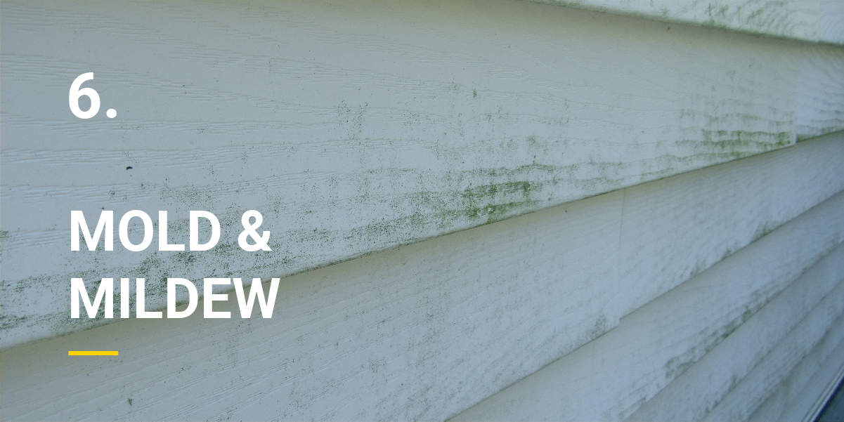 Mold on the siding of a house exterior