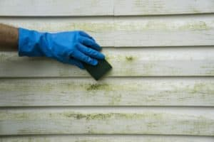 Green mold on siding of house